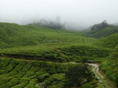 Plantations de thé aux Cameron Highlands