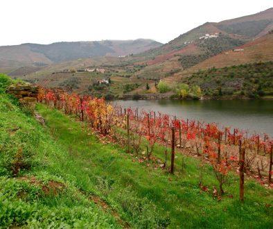 vigne automne douro