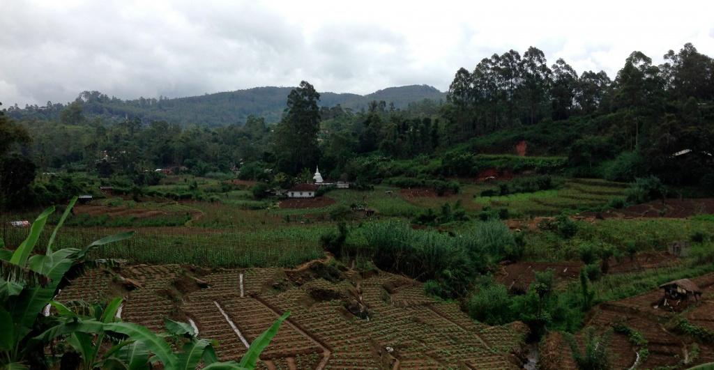 Cultures au coeur des montagnes du Sri Lanka