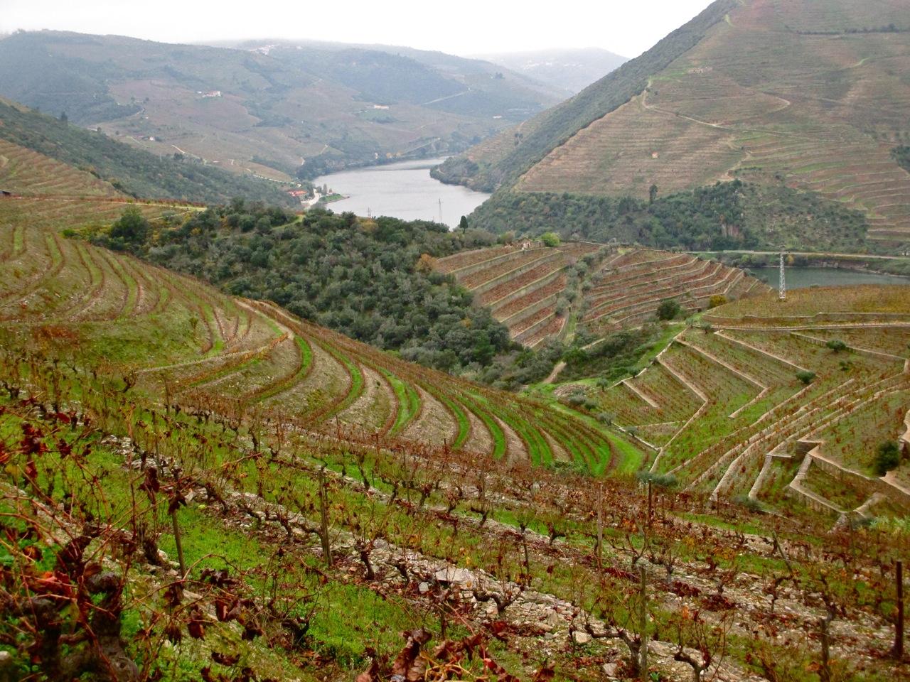 vignes vallee porto