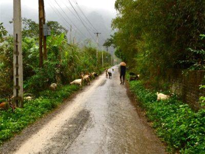 Sur les chemins de Ninh Binh au Vietnam
