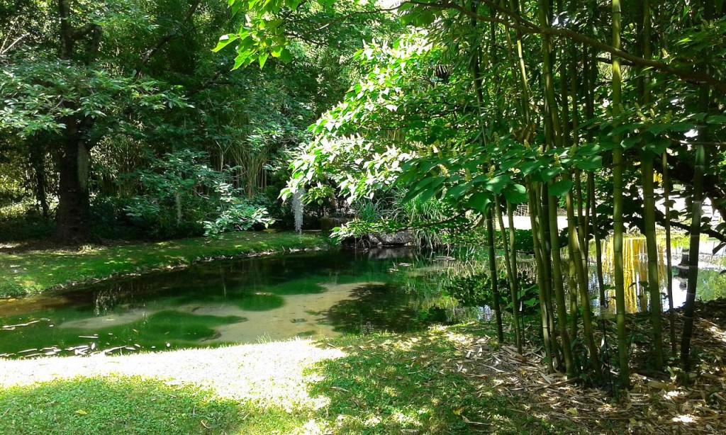 Visite de la Bambouseraie d'Anduze