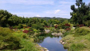 Découvrir la vallée du Dragon à la Bambouseraie d'Anduze.