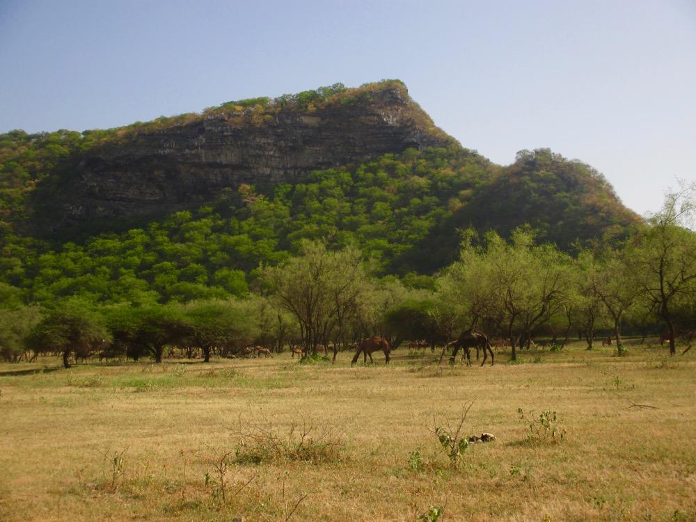 Le Dhofar en 3 jours : le Wadi Derbat