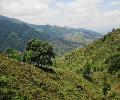 Mini trek dans les montagnes du Costa Rica