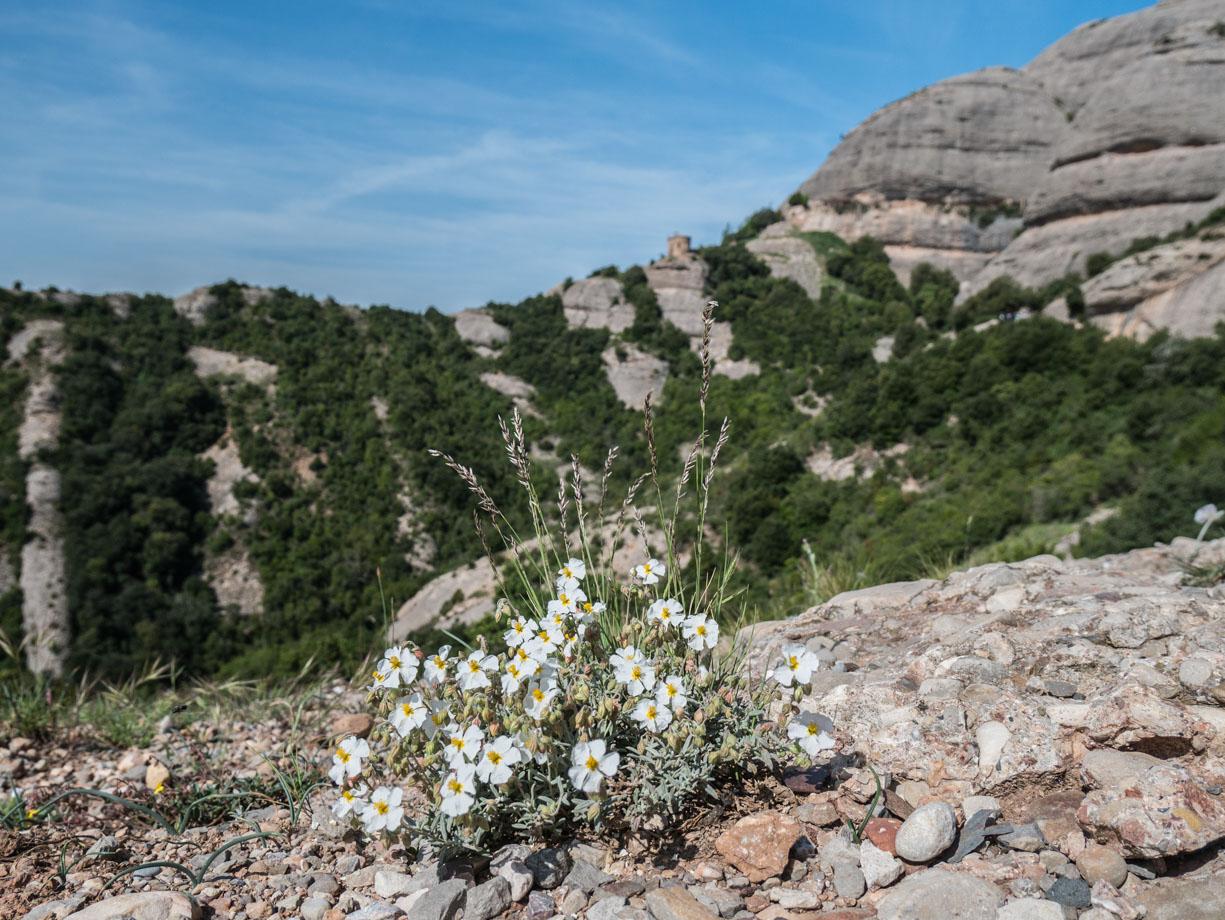 Randonnée en montagne en Catalogne