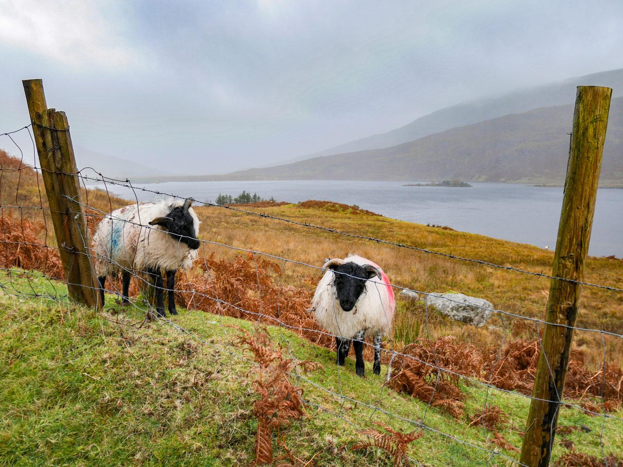 La traversée du Connemara