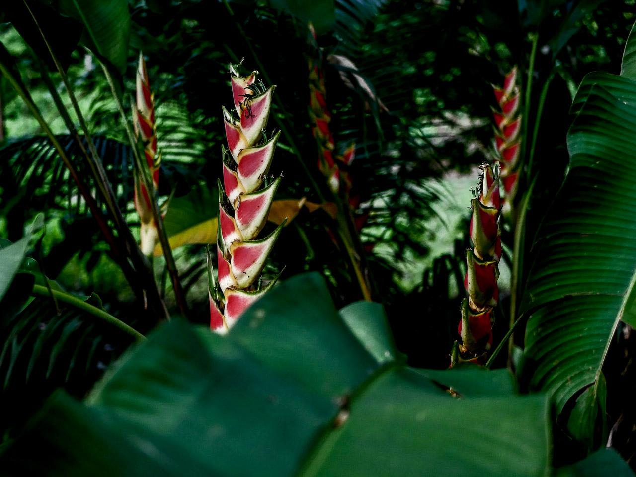 Découvrez la Martinque, l'île aux fleurs des Caraïbes