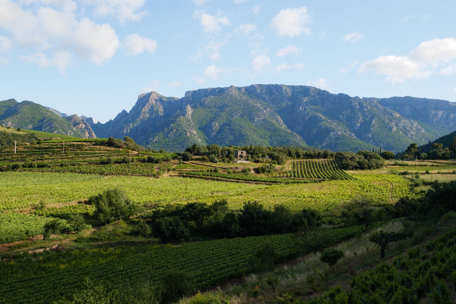 Le Mont Caroux dans le Haut Languedoc
