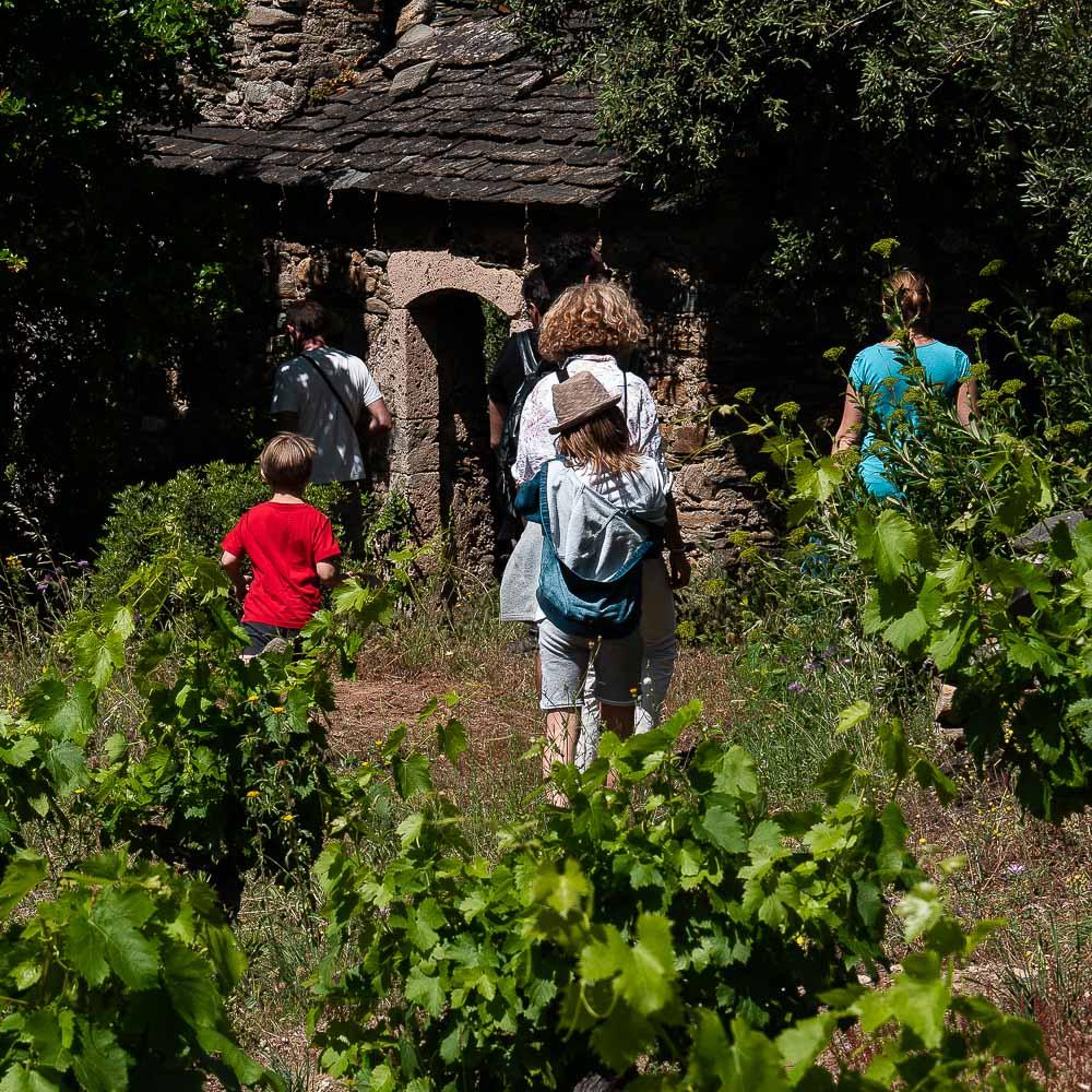 Balade dans les vignes du Haut Langudoc.